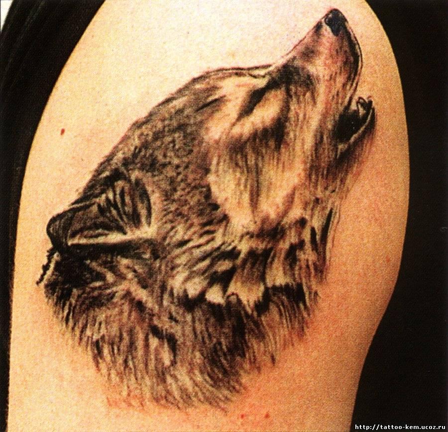 татуировок спине фото волков на